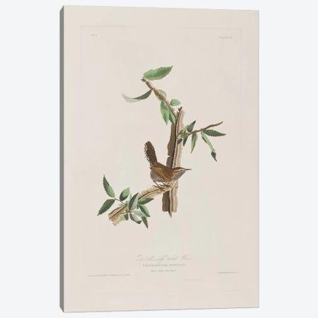 Bewick's Long-Tailed Wren & Iron Weed Canvas Print #BMN6716} by John James Audubon Canvas Art