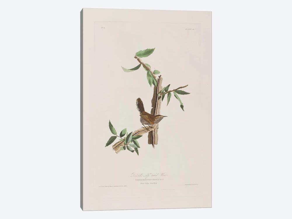 Bewick's Long-Tailed Wren & Iron Weed by John James Audubon 1-piece Canvas Art Print