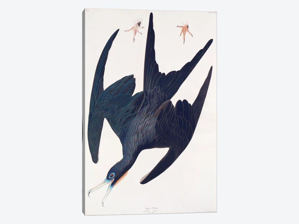 Frigate Pelican by John James Audubon 1-piece Canvas Art Print