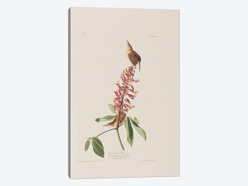 Great Carolina Wren & Red Buckeye by John James Audubon 1-piece Canvas Artwork