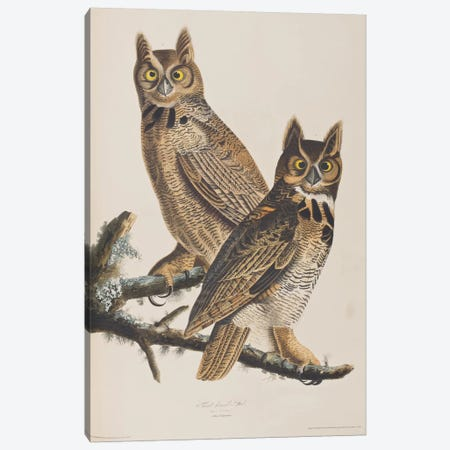 Great Horned Owl Canvas Print #BMN6732} by John James Audubon Art Print