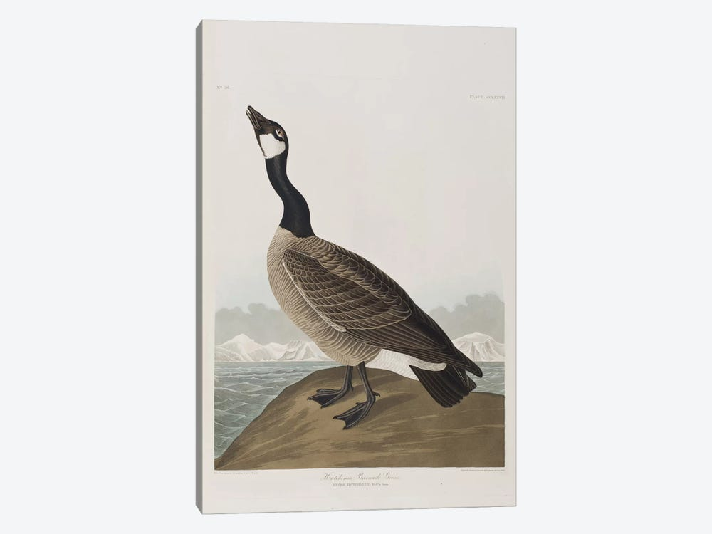 Hutchins's Barnacle Goose by John James Audubon 1-piece Canvas Art