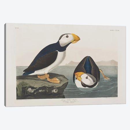 Large-Billed Puffin Canvas Print #BMN6734} by John James Audubon Canvas Art