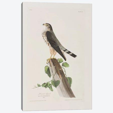 Le Petit Caporal Canvas Print #BMN6735} by John James Audubon Canvas Wall Art