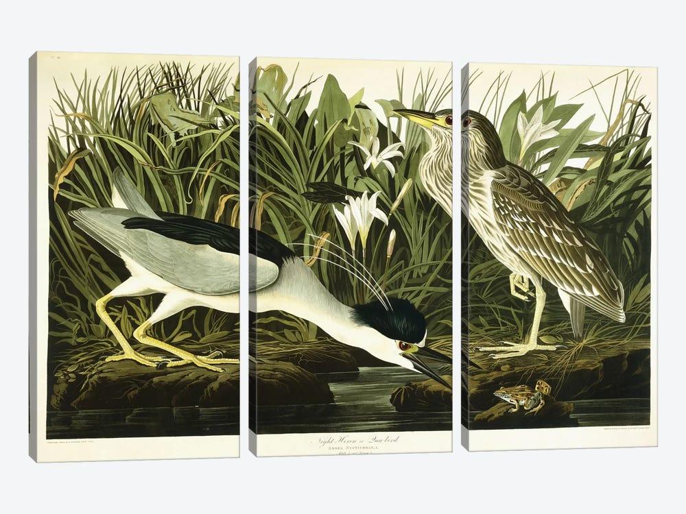 Night Heron (Qua Bird) by John James Audubon 3-piece Canvas Artwork