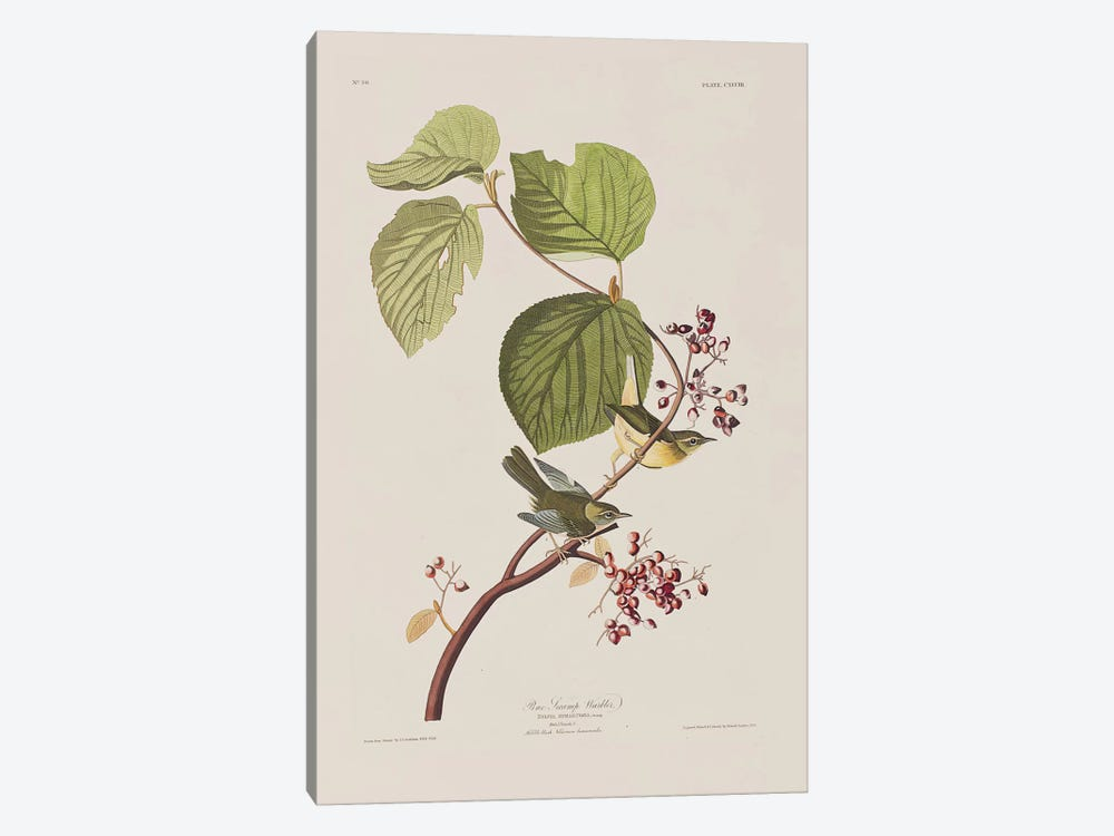 Pine Swamp Warbler & Hobble Bush by John James Audubon 1-piece Canvas Artwork