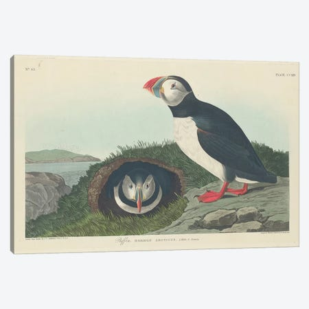 Puffin Canvas Print #BMN6741} by John James Audubon Canvas Wall Art