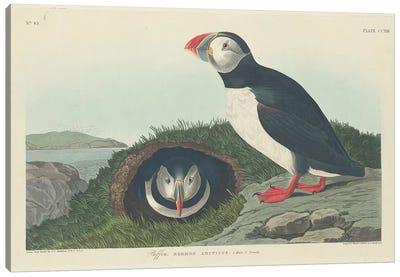 Audubon's Birds Of America Series: Puffin Canvas Print #BMN6741