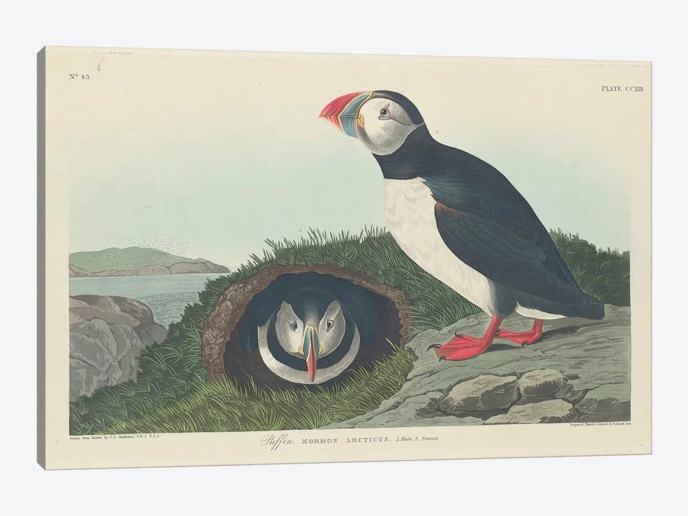 Puffin by John James Audubon 1-piece Canvas Art Print