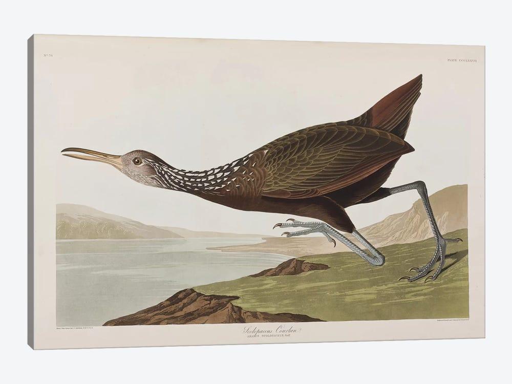 Scolopaceus Courlan by John James Audubon 1-piece Canvas Wall Art