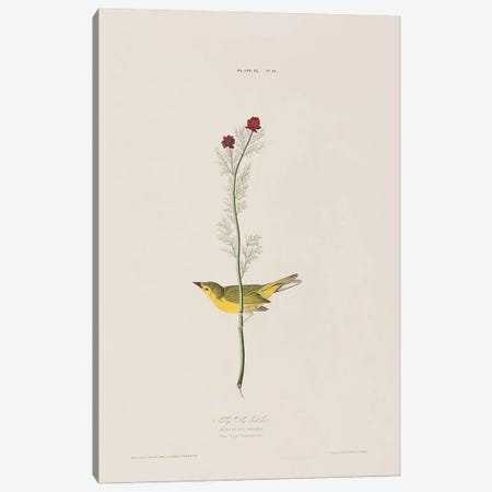 Selby's Fly Catcher & Pheasant's Eye Canvas Print #BMN6745} by John James Audubon Canvas Art Print