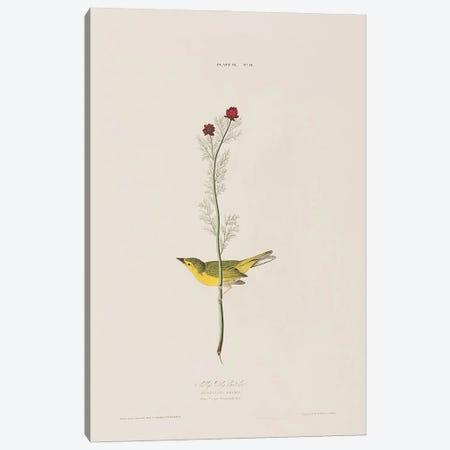 Selby's Fly Catcher & Pheasant's Eye Canvas Print #BMN6745} by John James Audubon Canvas Art Print