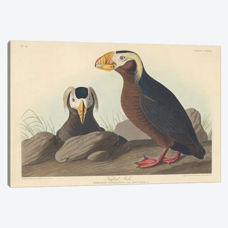 Tufted Auk Canvas Print #BMN6747} by John James Audubon Canvas Print