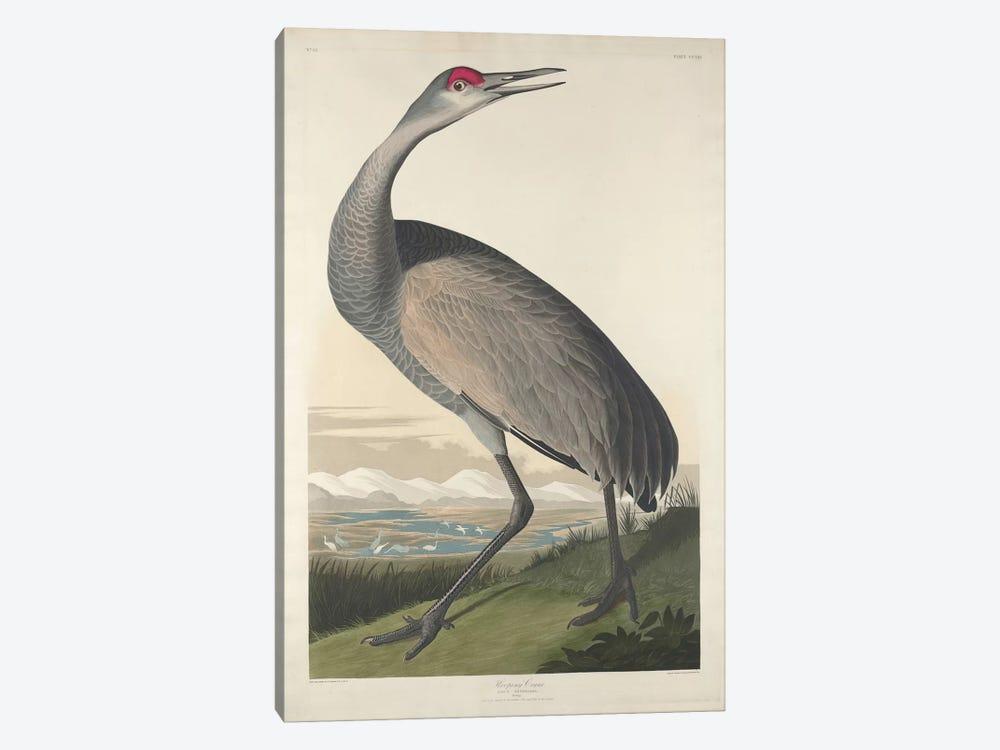 Whooping Crane by John James Audubon 1-piece Canvas Art Print