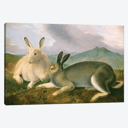 Arctic Hare (Audubon Commission) Canvas Print #BMN6940} by Joseph Bartholomew Kidd Canvas Artwork