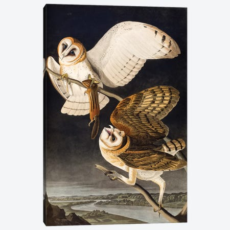 Barn Owl (Audubon Commission) Canvas Print #BMN6941} by Joseph Bartholomew Kidd Canvas Artwork