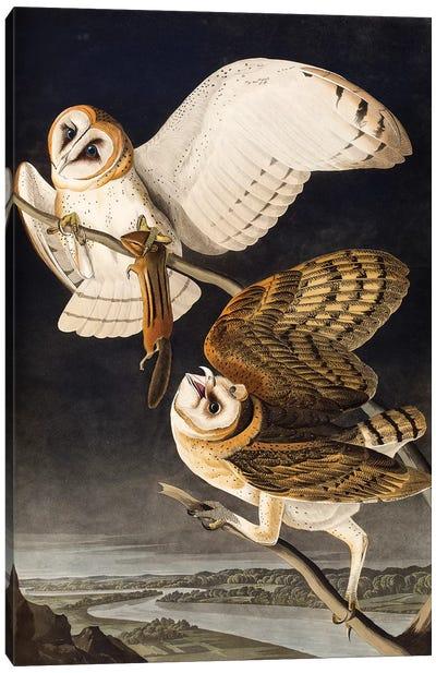Barn Owl (Audubon Commission) Canvas Print #BMN6941