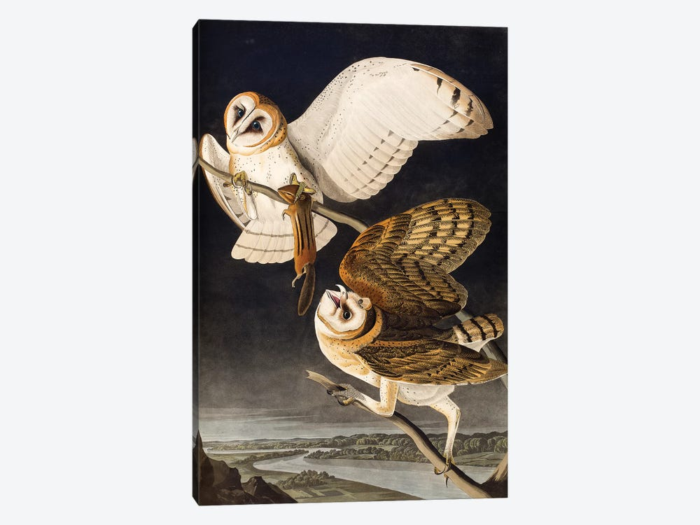 Barn Owl (Audubon Commission) by Joseph Bartholomew Kidd 1-piece Canvas Art
