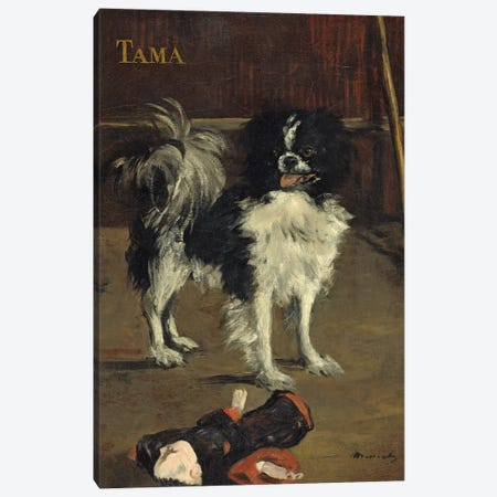 Tama, The Japanese Dog, c.1875 Canvas Print #BMN7028} by Edouard Manet Canvas Artwork