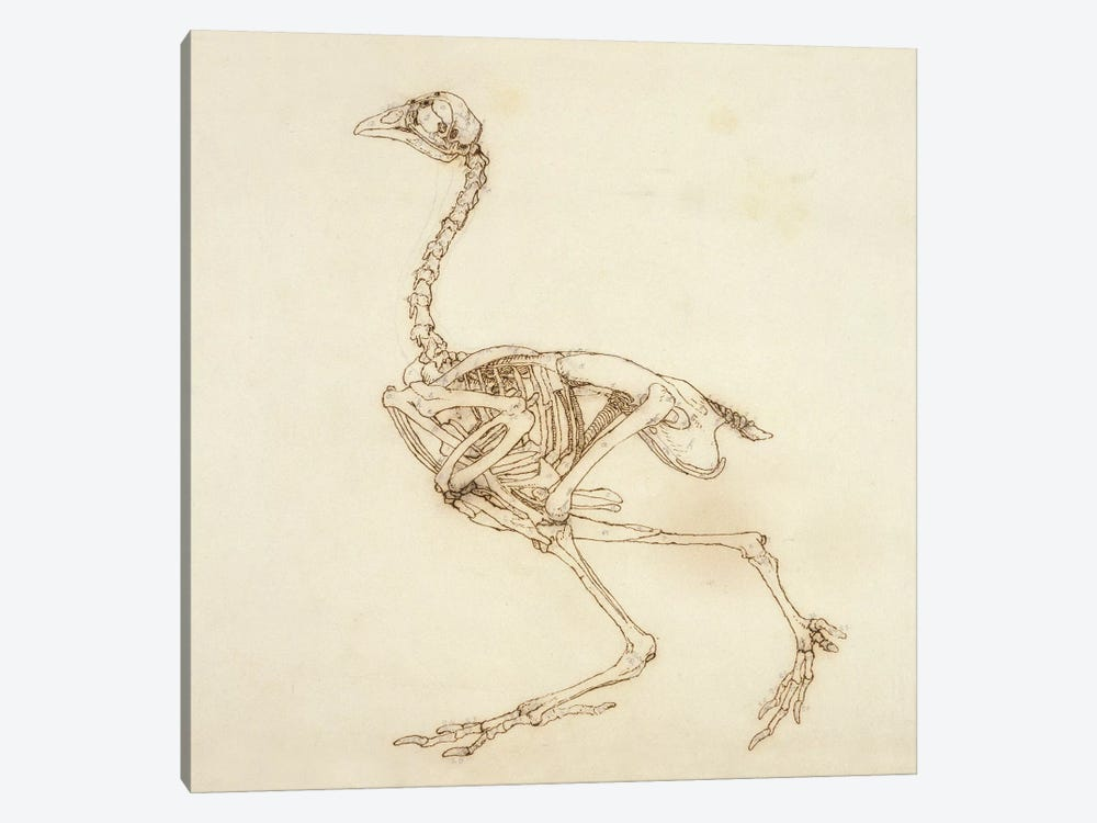 Dorking Hen Skeleton, Lateral View, 1795-1806 by George Stubbs 1-piece Canvas Art Print