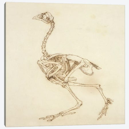 Dorking Hen Skeleton, Lateral View, 1795-1806 3-Piece Canvas #BMN7066} by George Stubbs Canvas Print
