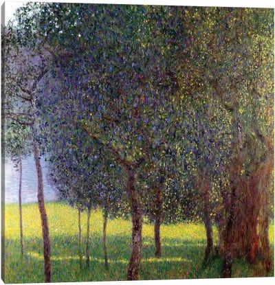 Fruit Trees, 1901 Canvas Art Print