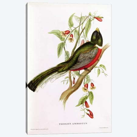 Trogon Ambiguus from 'Tropical Birds', 19th century  3-Piece Canvas #BMN712} by John Gould Canvas Art