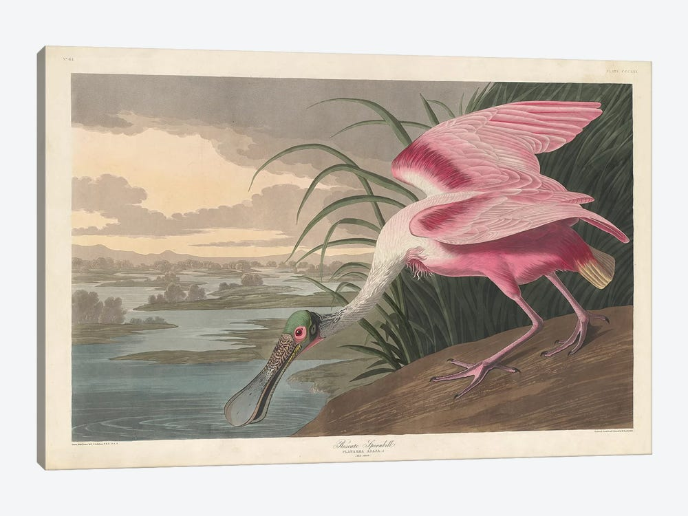 Roseate Spoonbill, 1836 by John James Audubon 1-piece Canvas Wall Art