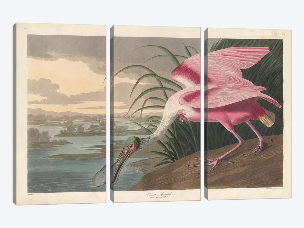 Roseate Spoonbill, 1836 by John James Audubon 3-piece Canvas Artwork