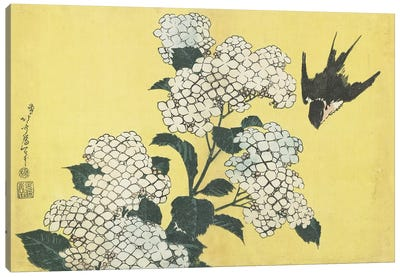 Hydrangea And Swallow, c.1832 Canvas Art Print