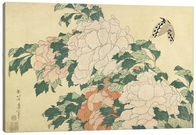 Peonies And Butterfly, c.1830-31 Canvas Art Print