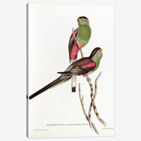 Psephotus Pulcherrimus Canvas Print #BMN716} by John Gould Canvas Print