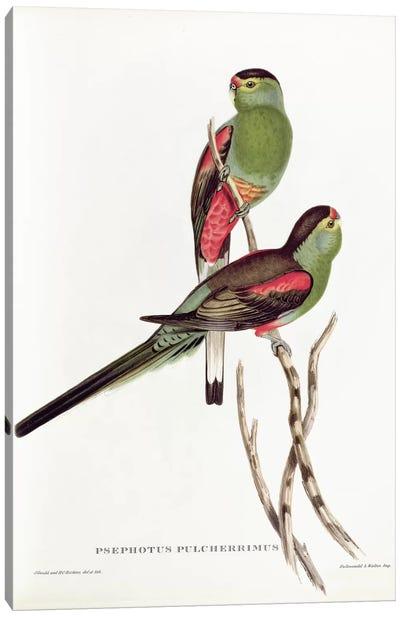 Psephotus Pulcherrimus Canvas Art Print