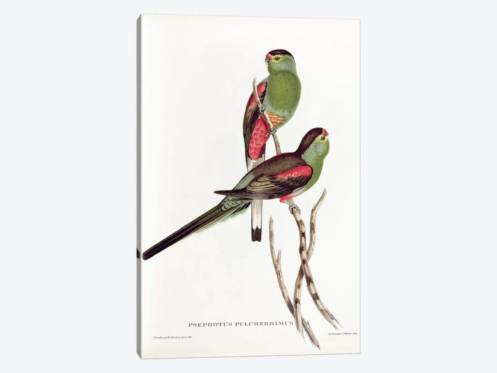 Psephotus Pulcherrimus by John Gould 1-piece Art Print