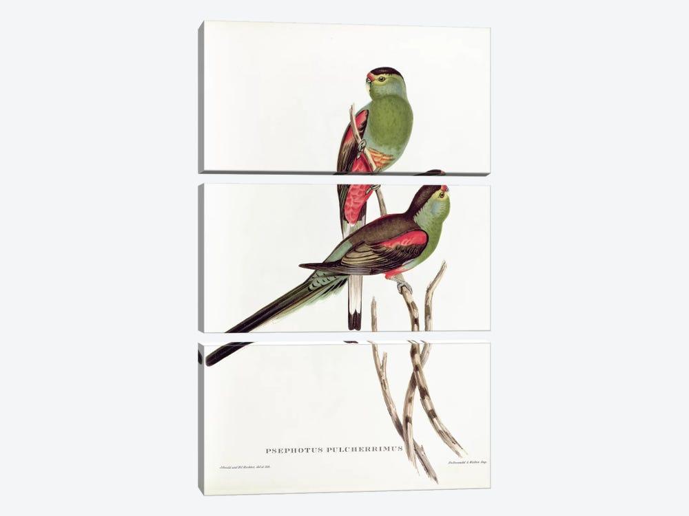 Psephotus Pulcherrimus by John Gould 3-piece Canvas Print