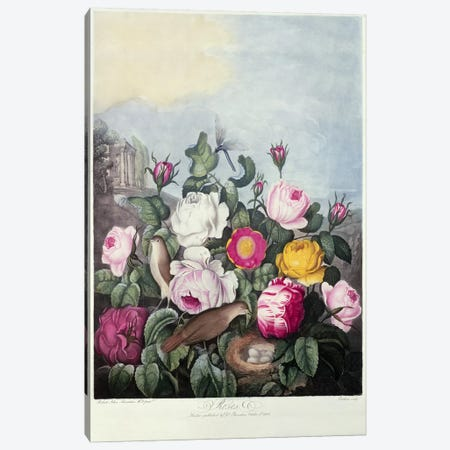 Roses, engraved by Earlom, from 'The Temple of Flora', by Robert Thornton, pub. 1805  Canvas Print #BMN719} by Robert John Thornton Canvas Art
