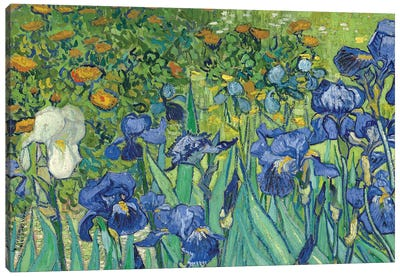 Detail Of Center-Left, Irises, 1889 Canvas Art Print