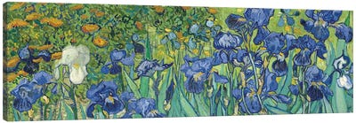 Irises, 1889 Canvas Art Print