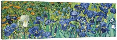 Irises, 1889 Canvas Art Print