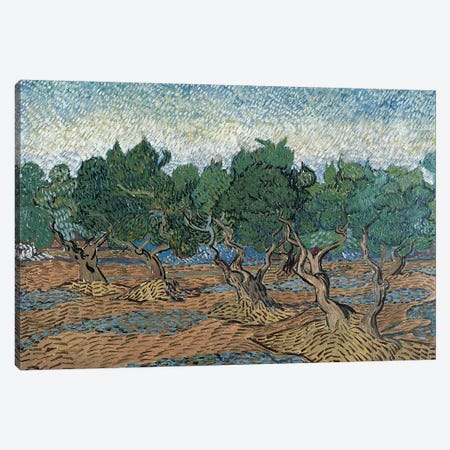 Olive Grove, 1889 Canvas Print #BMN7219} by Vincent van Gogh Art Print