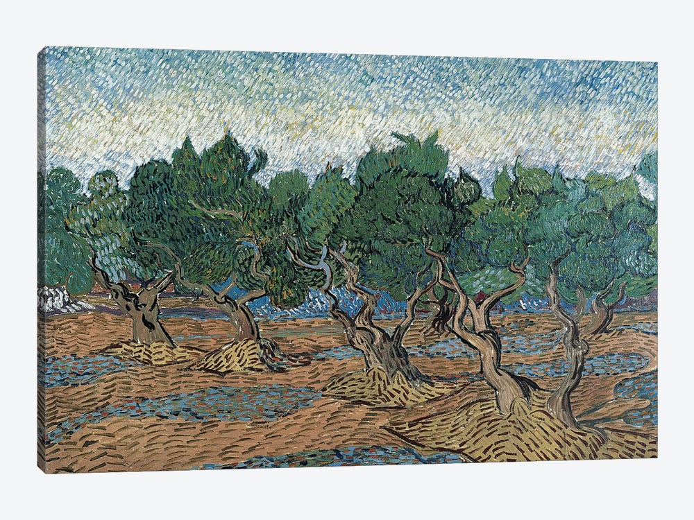 Olive Grove, 1889 by Vincent van Gogh 1-piece Canvas Art