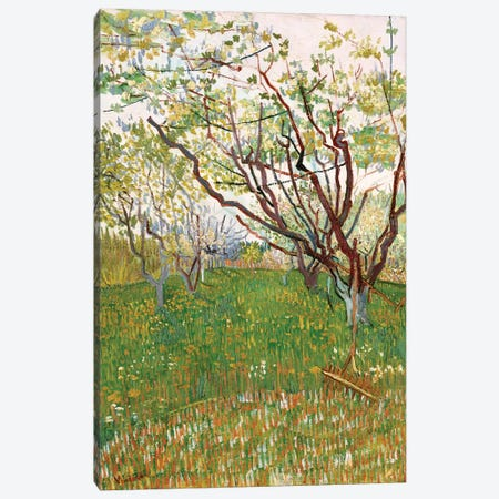 The Flowering Orchard, 1888 Canvas Print #BMN7226} by Vincent van Gogh Canvas Art Print
