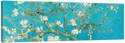 Almond Blossom Canvas Art Print