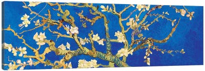 Almond Blossom On Royal Blue Canvas Art Print