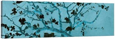 Almond Blossom On Teal Canvas Art Print