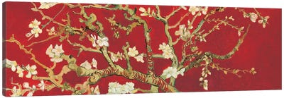 Almond Blossom On Red Canvas Art Print