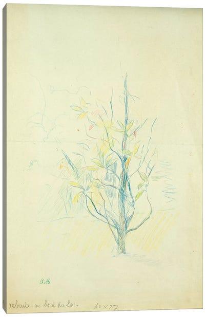 Bushes By The Lake, 1893 Canvas Art Print