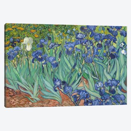 Irises, 1889  Canvas Print #BMN744} by Vincent van Gogh Canvas Art