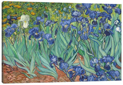 Irises, 1889  Canvas Print #BMN744