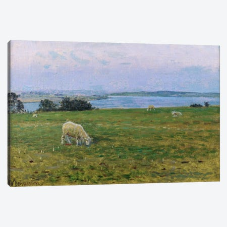 Sheep Grazing, Osterby, Skagen  Canvas Print #BMN750} by Viggo Johansen Canvas Art
